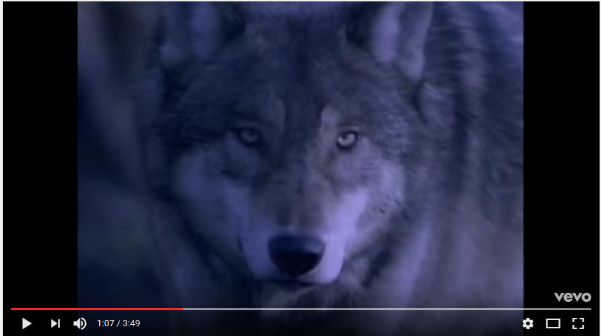 Despite the fact that the editing works hard to convince us that the occasionally appearing wolves fit into the story, they remain blatantly irrelevant. If they're supposed to be chasing Steve Coy on a rainy night, why do they look like they're just wandering around somewhere during broad daylight?